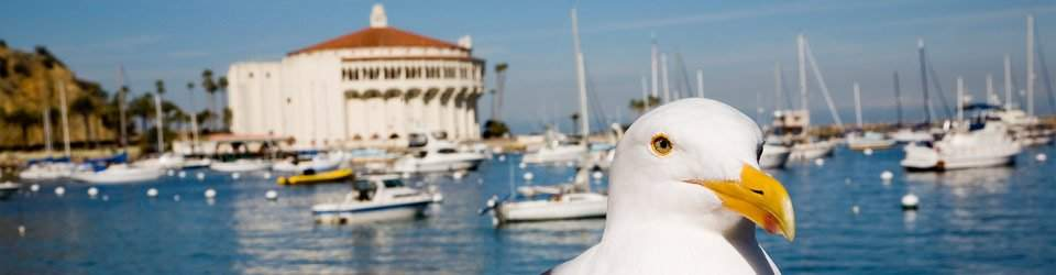 Catalina Island Pet Friendly Hotels